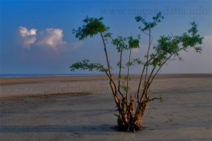 Mangrove Forest on Kiran Beach, Henry's Island