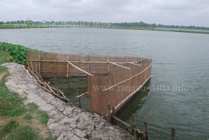 Bamboo Fencing, East Calcutta Wetland