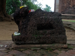 Nandi Bull, Dihar