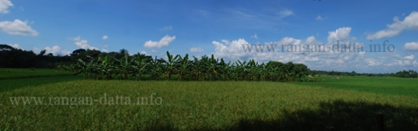 Panorama of agriculture fields, Chandraketugarh, Berachampa