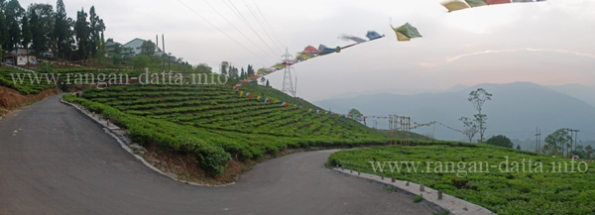 Panoramic view of Tea Gardens, Cochrane Place, Kurseong