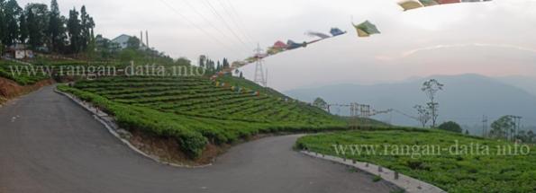 Panoramic view of Tea Gardens, Cochrane Place, Kurseong