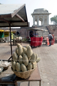 Baobab Fruits, Mandu, MP