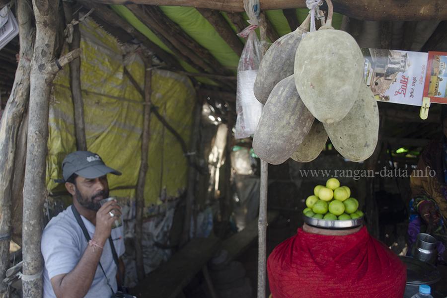 My friend Soumya drinks the Baobab juice in the shadows of the baobab fruit, Mandu, MP