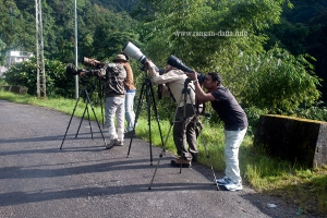Big lenses looking for small birds, Sikkim Silk Route