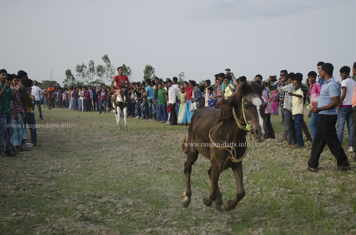 The rider has collapsed, but the horse gallops on, Horse Race, Jatar Deul, Kankandighi, near Raidighi, 24 Pargs (S)
