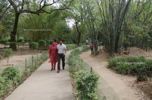 Walking Paths (Left) & Jogging Trails (Right), Lodi Garden