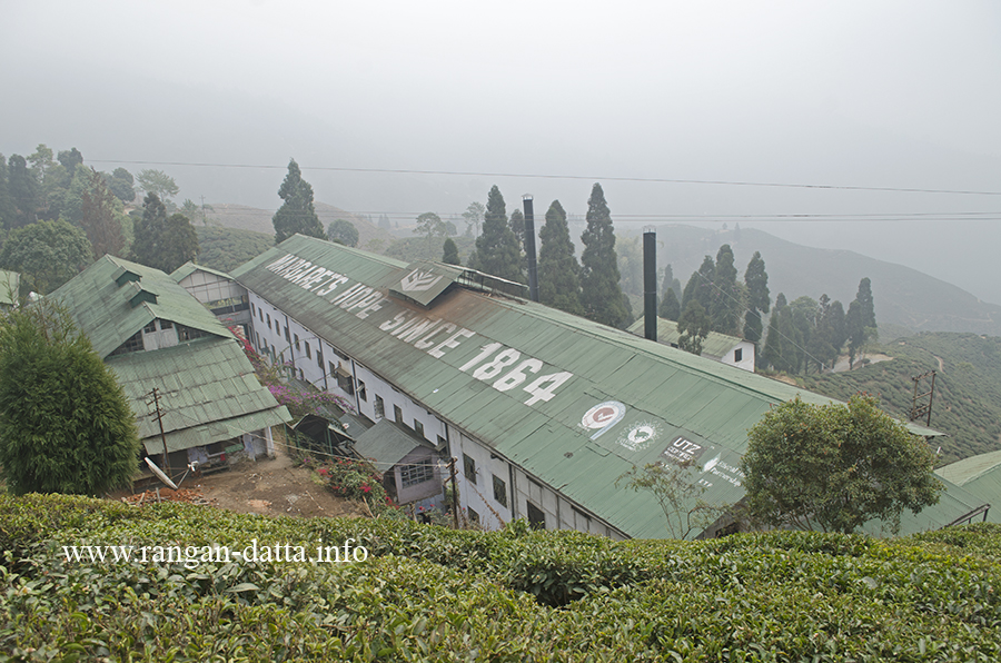 Margaret's Hope tea Factory, Kurseong