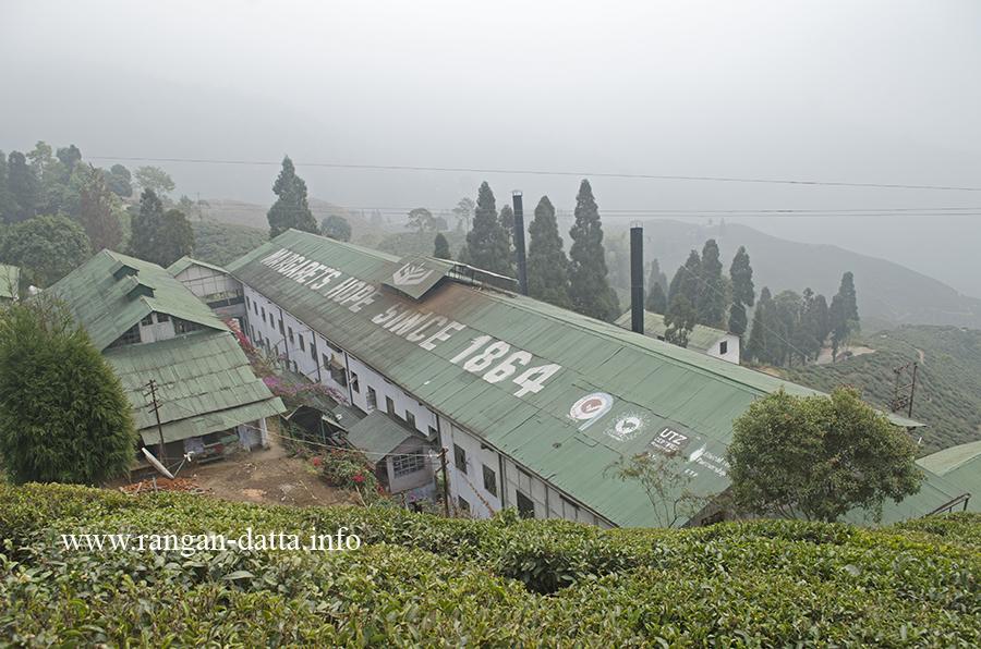 Margaret's Hope tea Factory, Kurseong