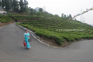 Rolling Tea Gardens , Kurseong (File Photo)