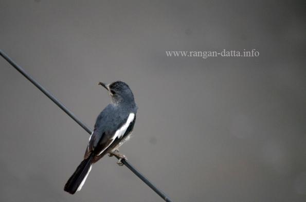 Bird 3g