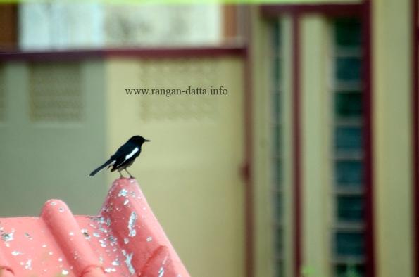 Bird 3l