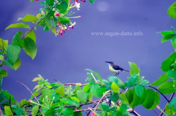 Bird 5n