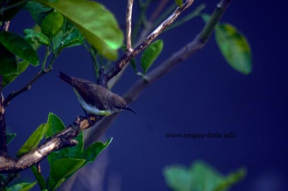 Bird 5q