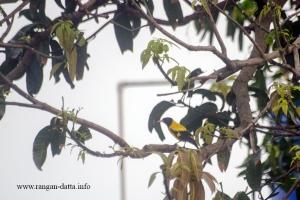Bird 6a