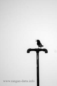 Bird 3c