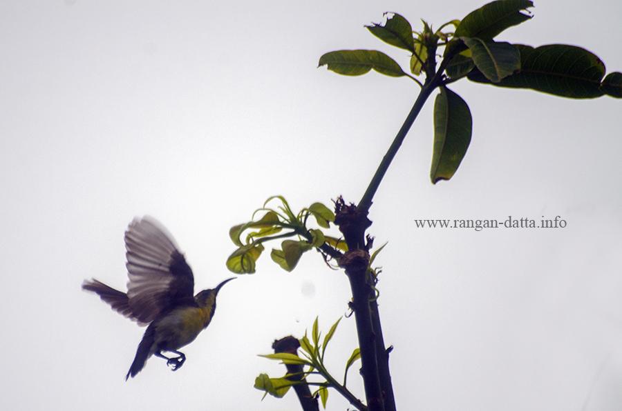 Bird 5z