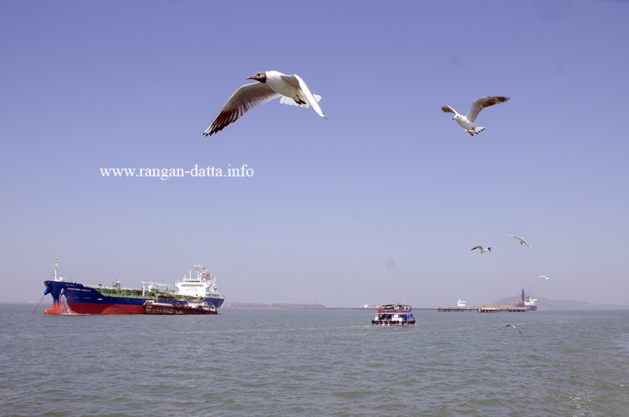 Gulls and ships, Elephant Island Ferry