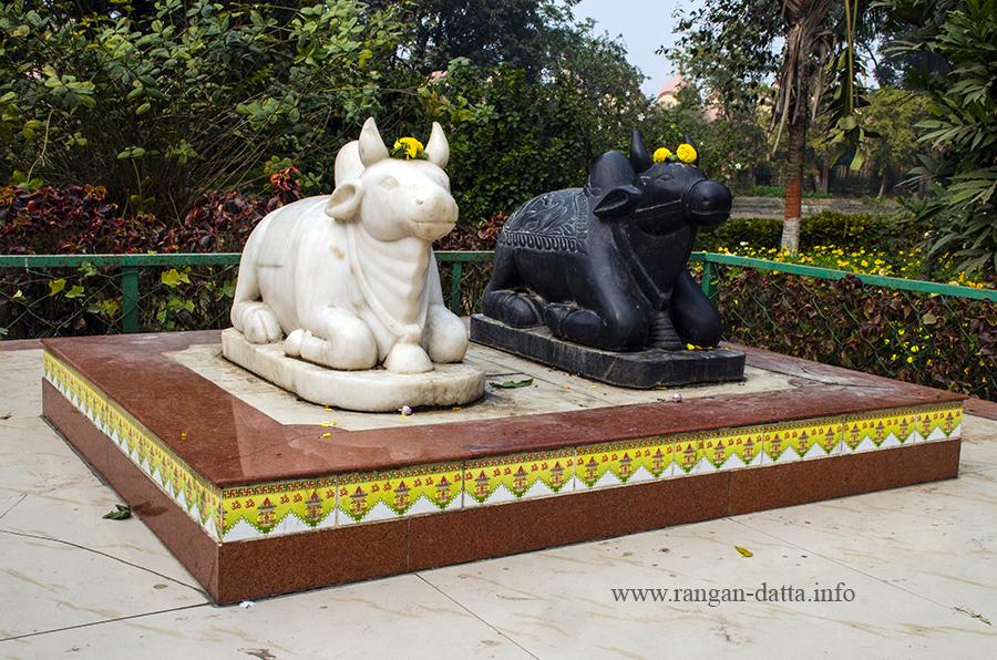 Black & white Nandi bulls, 108 Shiva Temple Complex, Nababhat, Bardhaman