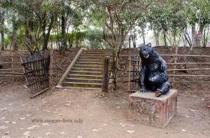 The bear of Bhalki Machan