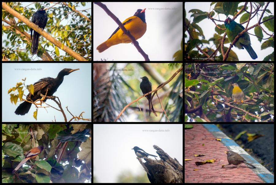 Birds of Rabindra Sarobar