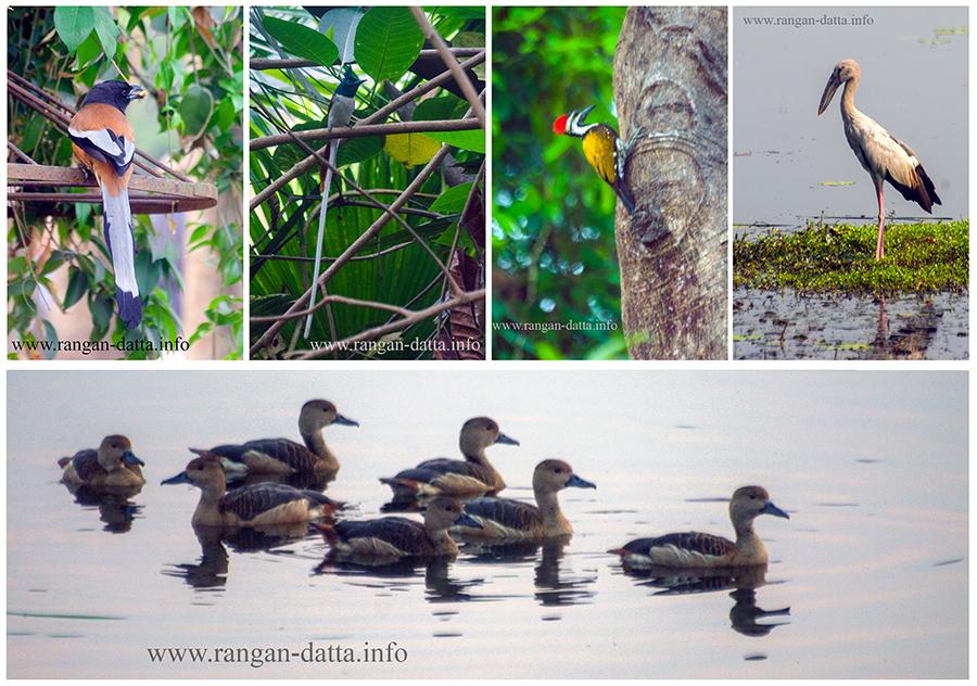 Birding hot spots in and around Kolkata - Rabindra Sarobar, Salt Lake Central Park, Salt Lake Canal Side, Baruipur Marshes and Santragachi