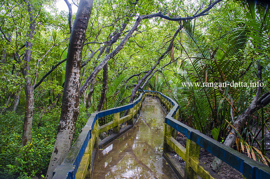 Canopy walk at Golpata Forest, Taki